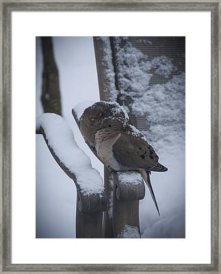 Framed Print featuring the photograph Baby It's Cold Outside 2 by Phil Abrams