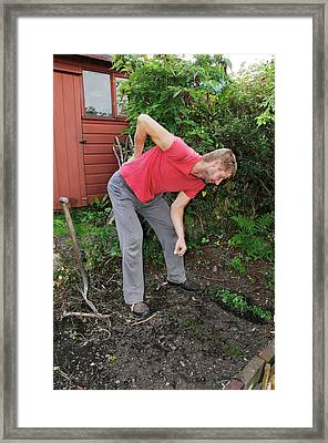 Back Pain From Gardening Framed Print by Cordelia Molloy