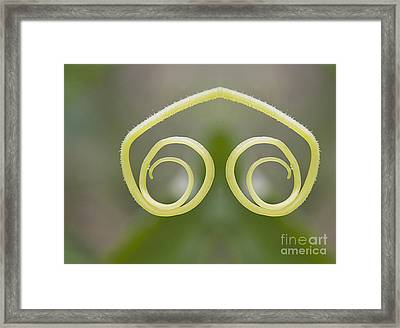 Background With Cucumber Tendril Eye Framed Print by Odon Czintos