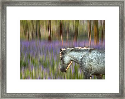Backlit Pony Walking Through Blurred Bluebell Forest Fantasy The Framed Print by Matthew Gibson