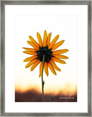 Backside Framed Print by Robert Bales