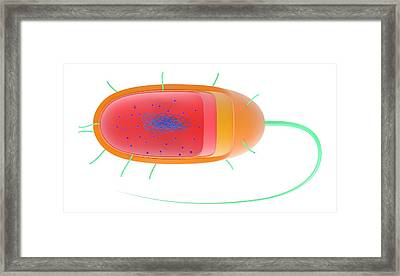 Bacterial Cell Framed Print by Science Photo Library