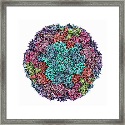 Bacterial Nanocompartment Framed Print