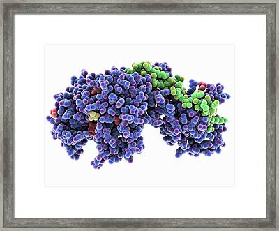 Bacterial Penicillin-binding Protein Framed Print by Laguna Design