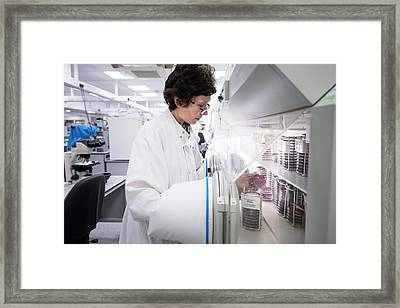 Bacteriology Lab Framed Print