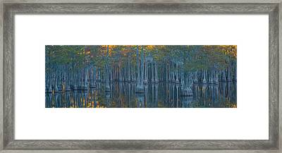 Bald Cypress Trees In A Forest, George Framed Print by Panoramic Images