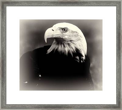 Bald Eagle Black And White Framed Print by Dan Sproul