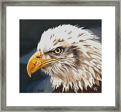 Bald Eagle Framed Print by Cory Still