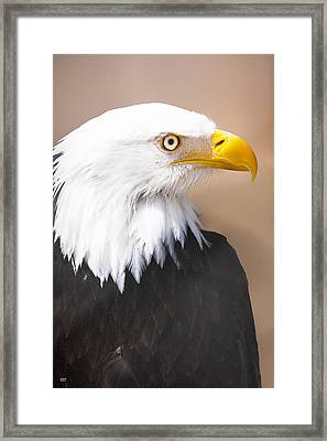 Bald Eagle Framed Print by David Millenheft