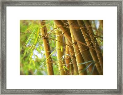 Bamboo Gold Framed Print by Jade Moon