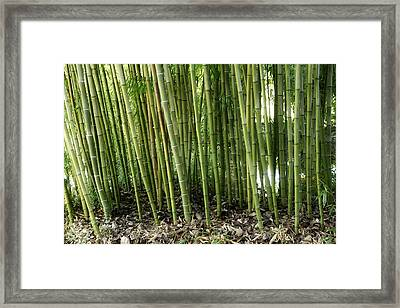 Bamboo Framed Print by Les Cunliffe