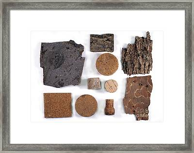 Bark And Commercial Cork Framed Print by Dr. Keith Wheeler