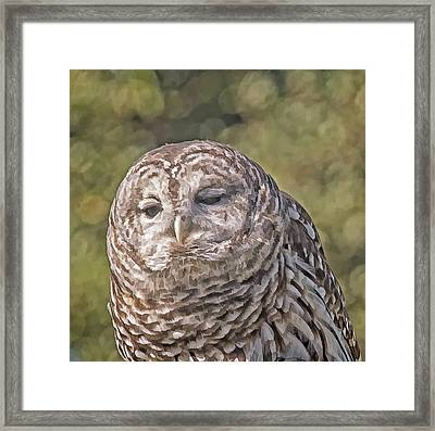 Framed Print featuring the photograph Barred Hoot Owl Photo Art by Constantine Gregory