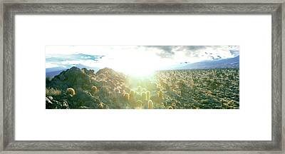 Barrel Cactus And Joshua Trees Framed Print by Panoramic Images
