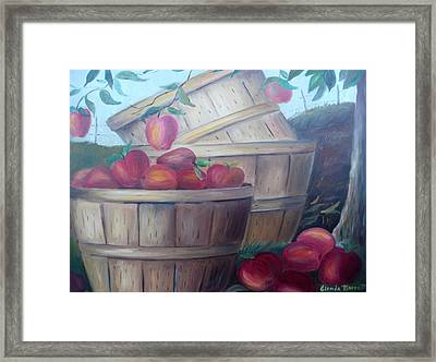 Baskets Of Apples Framed Print by Glenda Barrett
