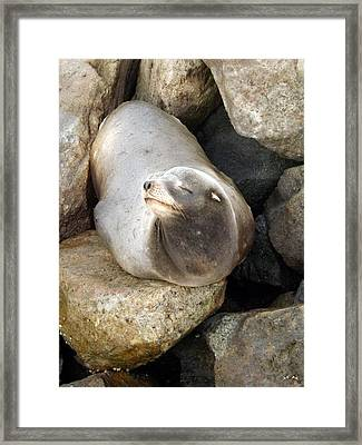 Basking Framed Print