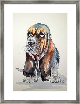 Basset Hound Framed Print