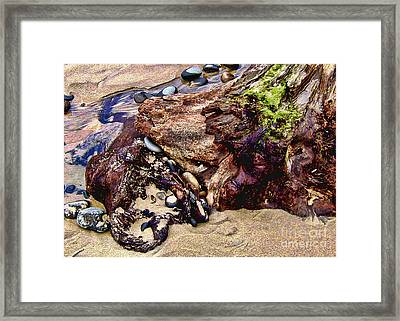 Beach Stump And Stones Framed Print by Joseph Vittek