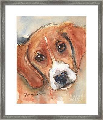 Beagle Dog  Framed Print