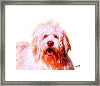 Bearded Collie Framed Print