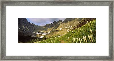Beargrass Xerophyllum Tenax Framed Print by Panoramic Images
