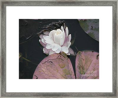 Framed Print featuring the photograph Beautiful Girl by Michael Krek