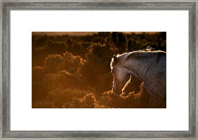 Beautiful Image Of New Forest Pony Horse Backlit By Rising Sun I Framed Print by Matthew Gibson