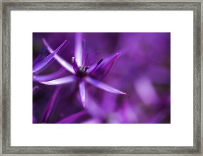 Beautiful Purple Floral Abstract Framed Print by Matthew Gibson