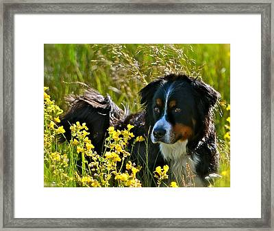 Beauty Boy Framed Print