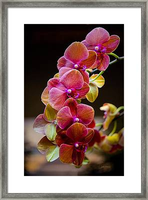 Beauty Of Orchids  Framed Print by Julie Palencia
