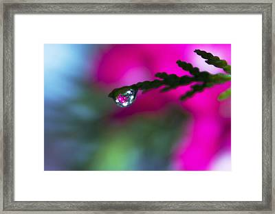 Beauty Within Framed Print by Dana Moyer
