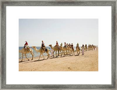 Bedouins And Their Camels Framed Print by Ashley Cooper