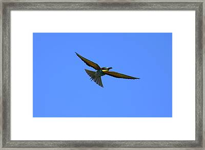 Bee-eathing Framed Print by Dragomir Felix-bogdan
