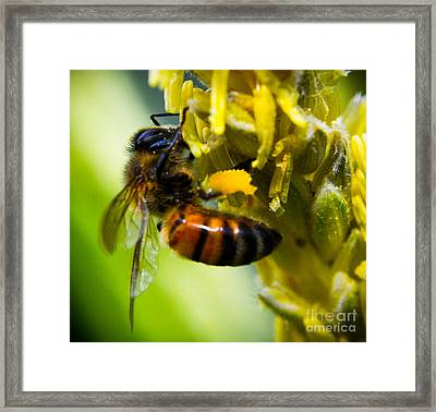 bee Framed Print by Kenroy Rhoden