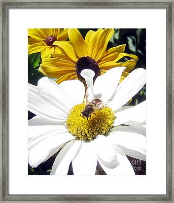 Framed Print featuring the photograph Beecause by Janice Westerberg