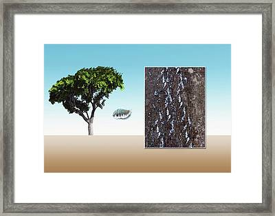 Beech Scale Framed Print