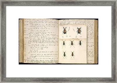 Beetles, 18th Century Illustration Framed Print