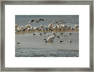 Behind Schedule Framed Print by Frederic Vigne