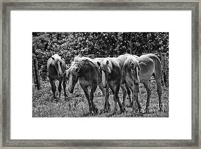 Framed Print featuring the photograph Belgian Draft Horses by Wilma  Birdwell
