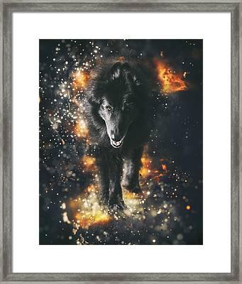 Belgian Sheepdog Art Framed Print by Wolf Shadow  Photography