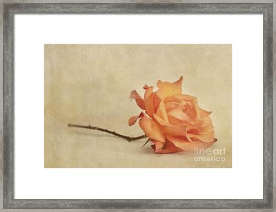 Bellezza Framed Print by Priska Wettstein