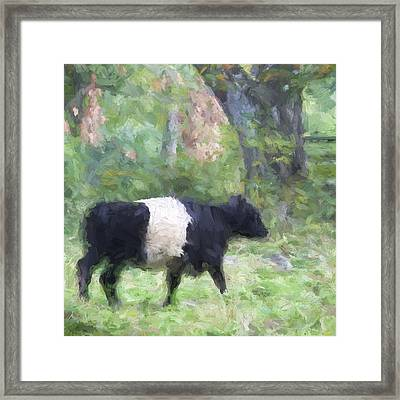 Belted Galloway Cow Painterly Effect Framed Print
