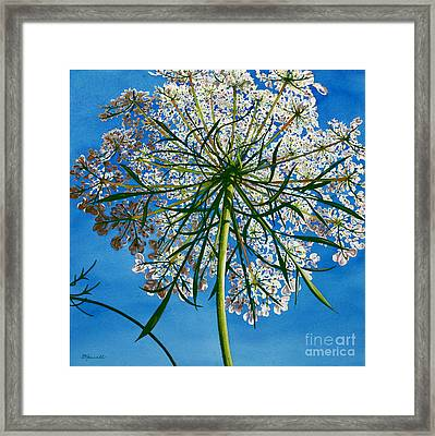Beneath Queen Anne's Lace  Framed Print by Barbara Jewell
