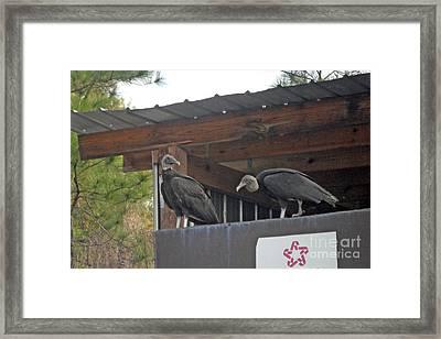 Framed Print featuring the photograph Best Friends by Doris Blessington