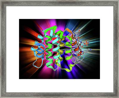 Beta Secretase Enzyme Framed Print