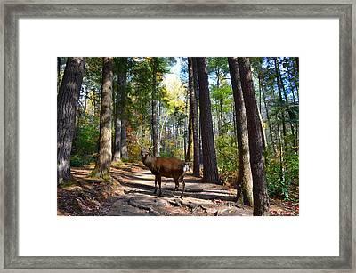 Big Buck Framed Print by Bob Jackson