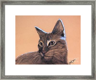 Big Kitten Framed Print