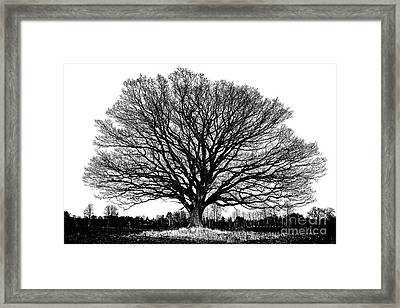 Big Old Oak Tree With Winter Leafless Branches Framed Print