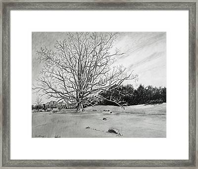 Big Tree Framed Print