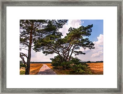 Bike Track In Hoge Veluwe National Park. Netherlands Framed Print by Jenny Rainbow